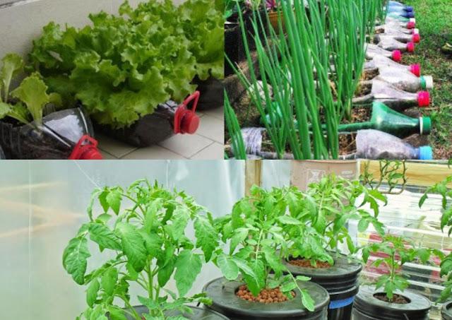 3 Ide Untuk Bertani Lahan Sempit Agar Untung Melimpah