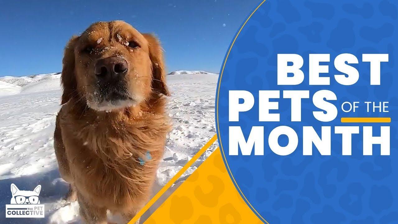 Best Pets Of The Month : 2019年2月に癒やされた微笑ましい動物ビデオの総集編