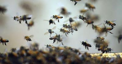 श्मशान में मधुमक्खियों ने किया हमला 35 घायल, शव छोड़ भागे लोग