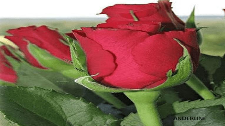 Puisi Valentine Tentang Kita