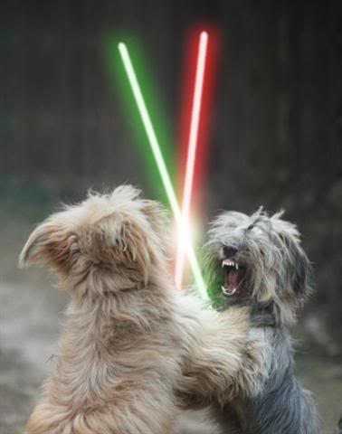 Pic Funny Pictures (# Funny animals with light sabers)