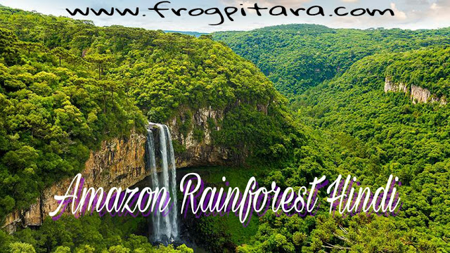 Interesting Facts And Information About Forests