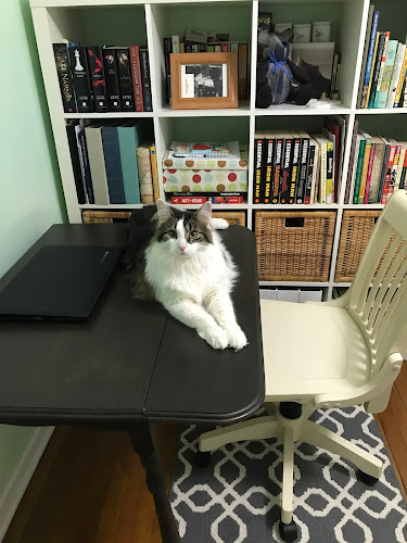 A large cat sit on the desk next to a laptop