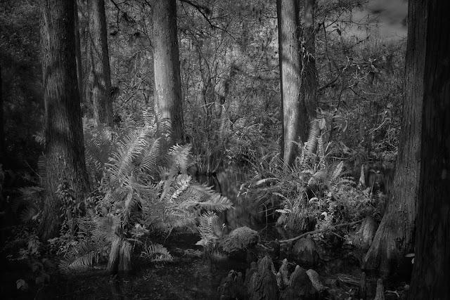 Fujifilm X100T, Florida Image