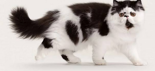Fakta Mengenai Kucing Domestik yang Butuh Diketahui