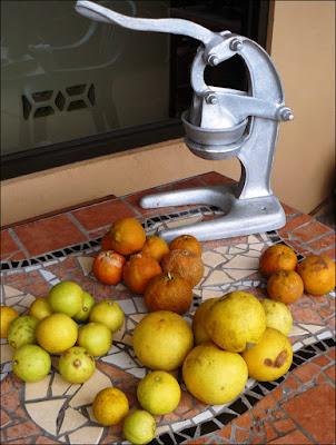 Various citrus fruits in Costa Rica