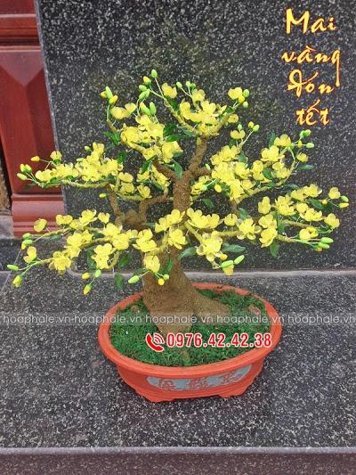 Goc bonsai mai dao tai Lac Trung