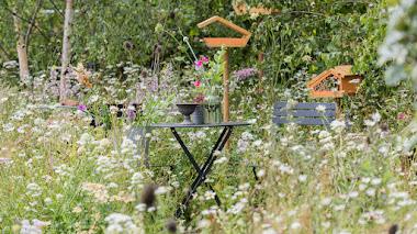 Ideas para atraer la vida silvestre al jardín: Springwatch Garden