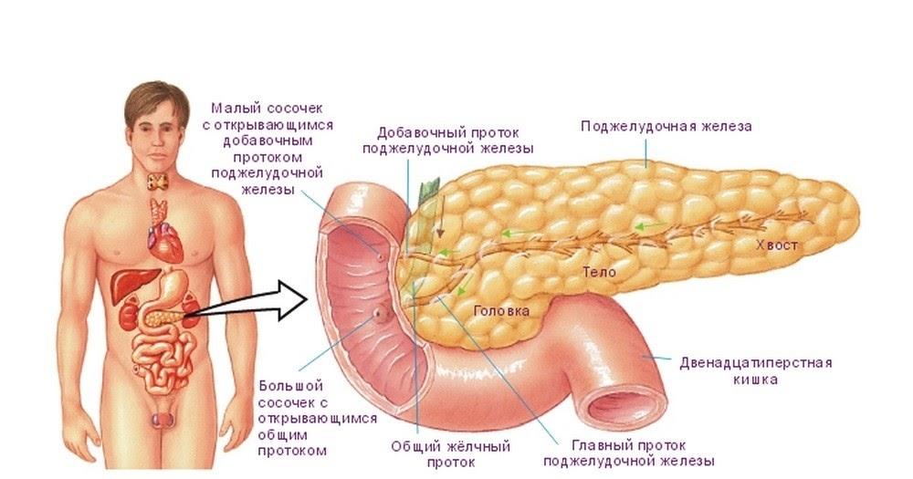 Как быстро восстановить поджелудочную железу