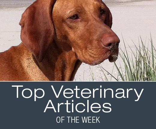 Top Veterinary Articles of the Week: Sudden Blindness in Dogs, Uveitis, and more ...