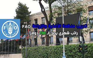 فرصة حضور تدريب لمنظمة FAO التابعة للأمم المتحدة براتب شهري يصل لـ 700 دولار