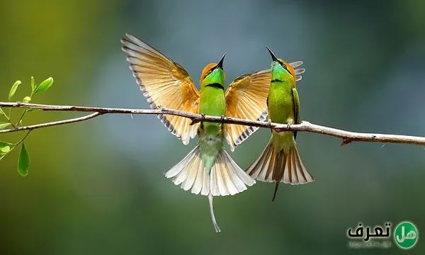 معلومات عن الطيور