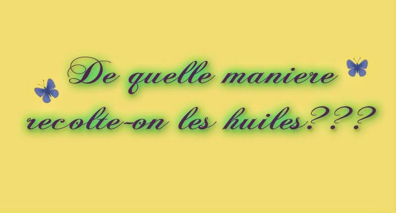 Les Mousquetettes©
