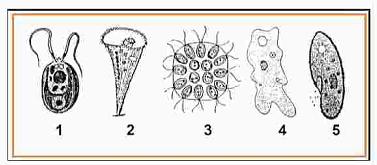 Perhatikan Gambar dibawah ini! Manakah diantara organisme ...