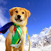 """He Couldn't Have Had More Than An Hour To Live""... But Becomes The First Dog Climb Mount Everest! Take A Look"
