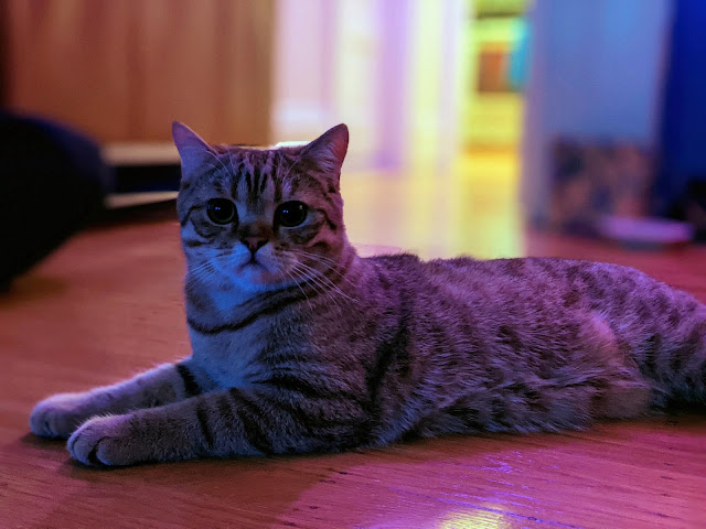 A gray tabby cat sits on a wood floor, at night