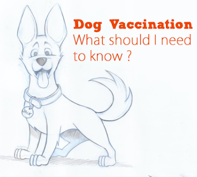 Four Core Diseases You Must Consider Before Vaccinating Your Dogs