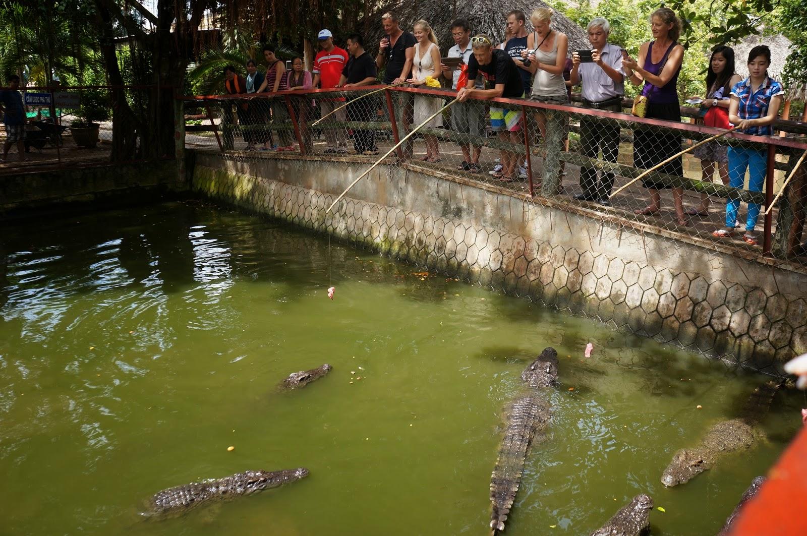 Crocodile fishing in Con Phung island