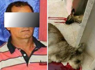 CRUELDADE: Empresário mata cães e gatos com espingarda em Varjota-Ce
