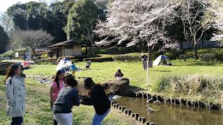 花島公園の様子。今年は人出も少ない。