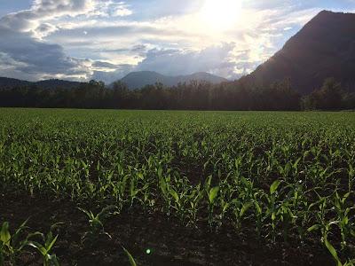 Fraser Valley, hops, farming