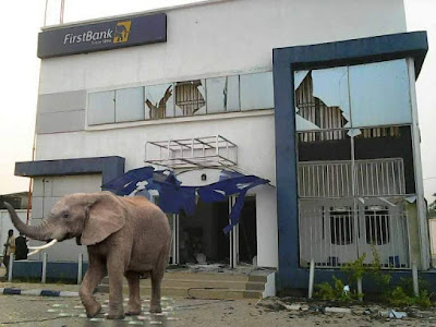 Shame! Mysterious Elephant Appears In First Bank Nig. – Lagos – Swallows 125Million Live