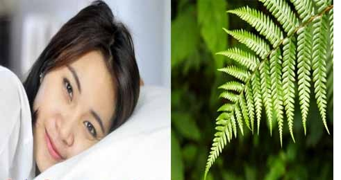 Want to Sleep Healthy? Fill Pillowcases With Fern Leaves And Feel The Benefits