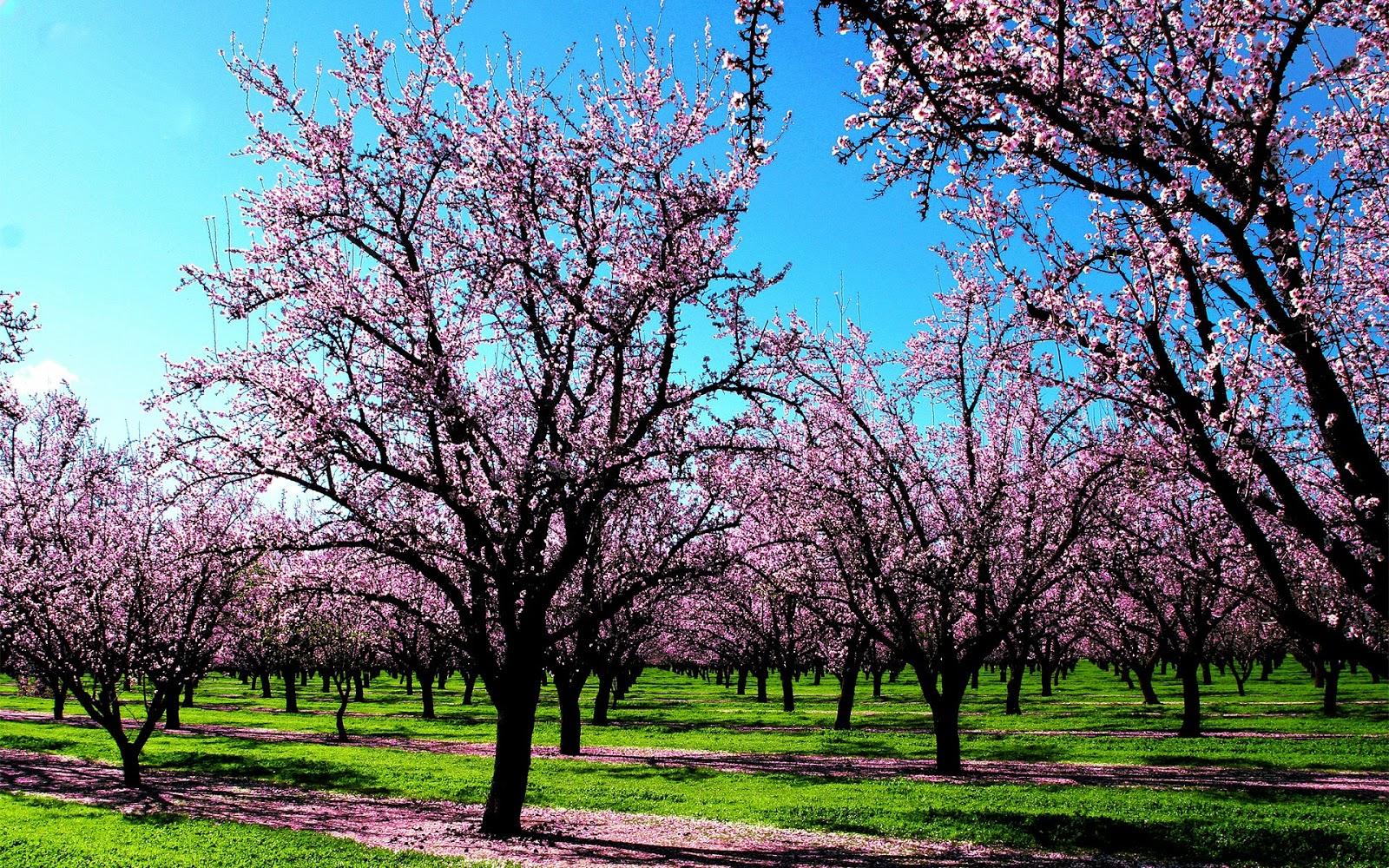 Spring HD Wallpapers Widescreen - Wallpapers