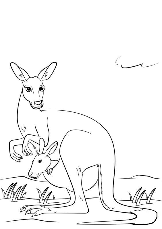 Tranh tô màu Kangaroo dễ thương