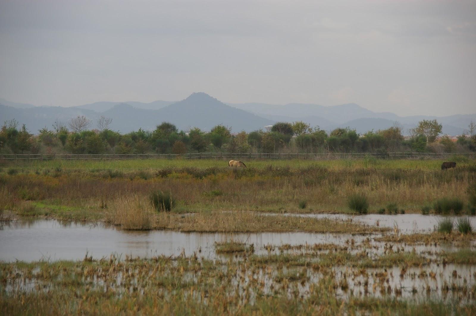 Delta Llobregat