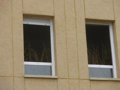 Marihuana en cuartel vista desde la calle