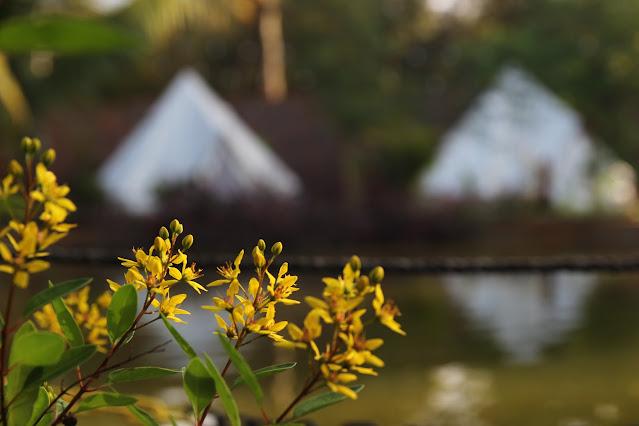 Bạn ghé thăm vườn trải nghiệm cắm trại, bbq, acoustic - 1.2021