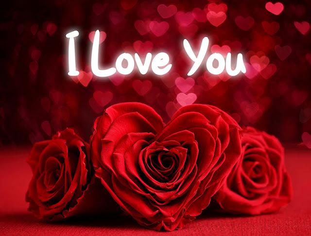 i love you rose gulab pics photo HD image love