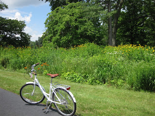 Breezer bicycle on a paved path with tall wildflowers and trees in the background.
