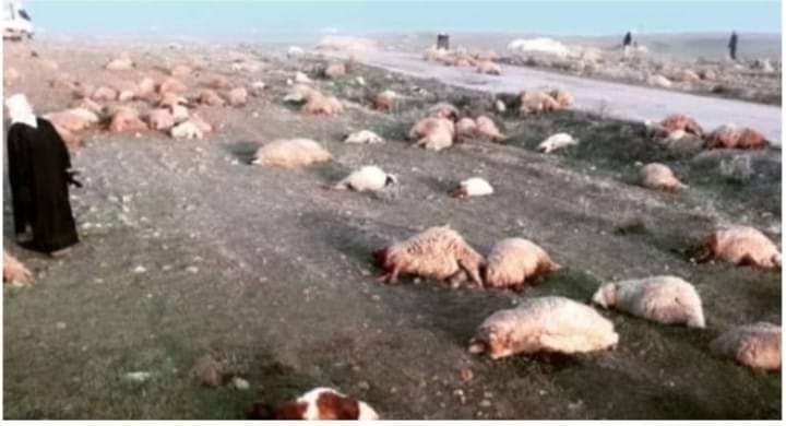 Pasukan Rezim Assad Bantai Domba Milik Warga di Aleppo