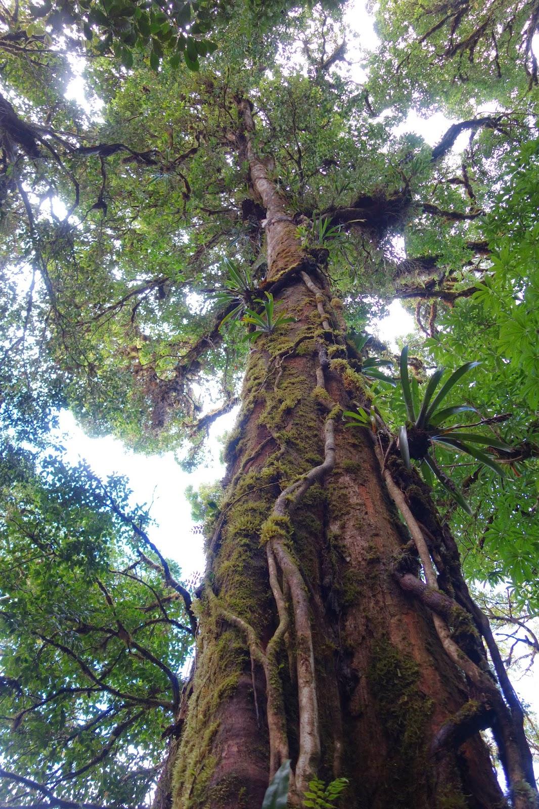 visiter monteverde