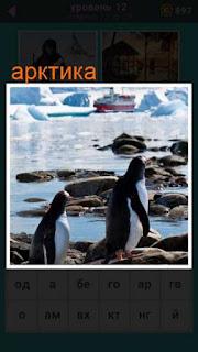 на берегу Арктики бродят два пингвина 667 слов 12 уровень