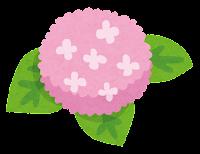 アジサイのイラスト(ピンク)