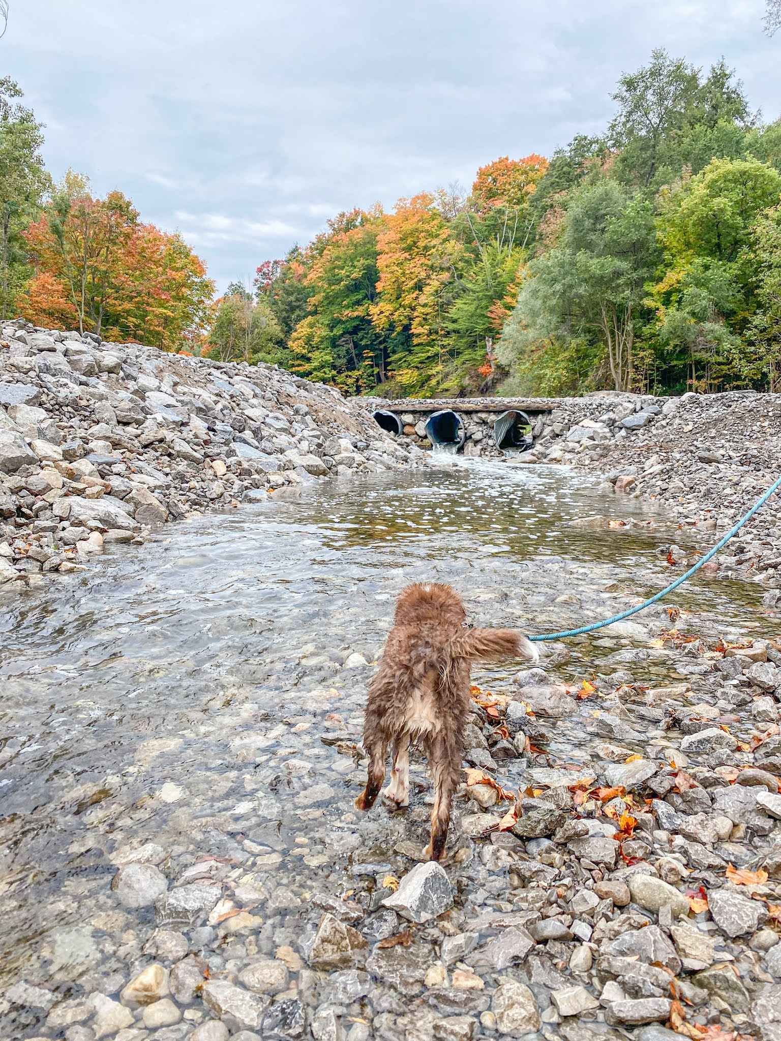 Where to See the Salmon Run in the Greater Toronto Area