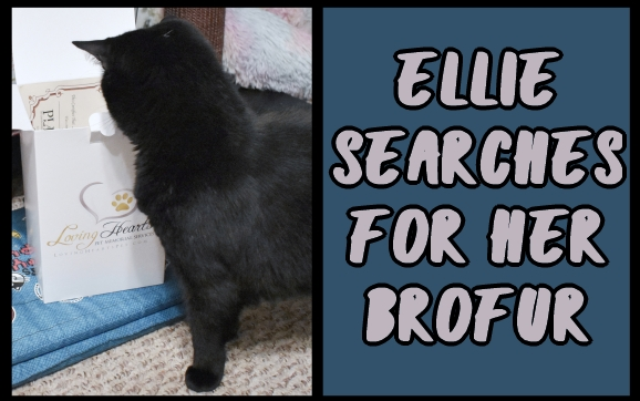 Ellie searches for her brofur