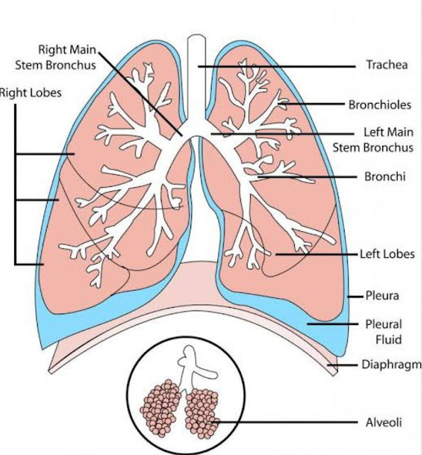 how to clean your lungs