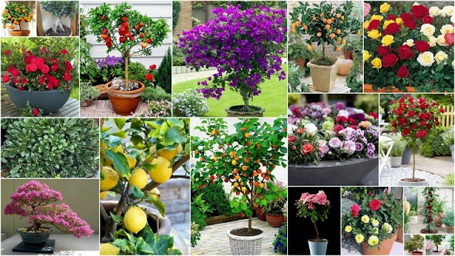 Λουλούδια και Καρποφόρα που διατίθενται και σε mini ποικιλίες ιδανικές για Μπαλκόνια