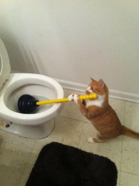 20 boss mèo bỗng tỏ ra bất bình thường