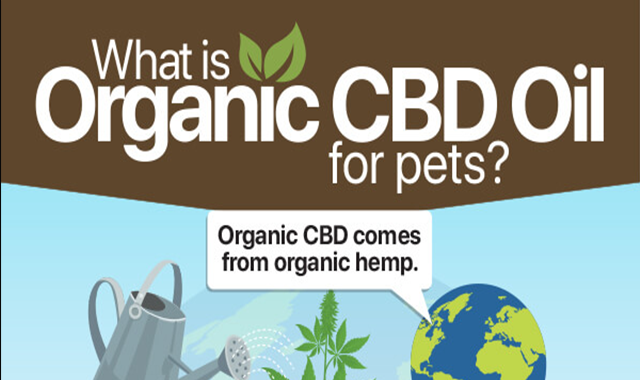 What is Organic CBD Oil for Pets?