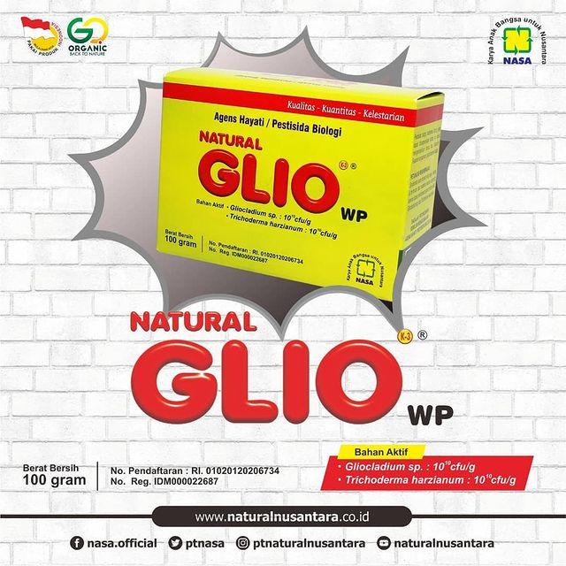Natural Glio (Gliocladium) - Agensia Hayati Pengendali Jamur