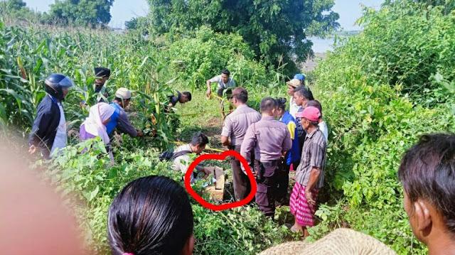 Sungguh Tega, Mayat Bayi Laki-laki Ditemukan Warga di Ladang Jagung