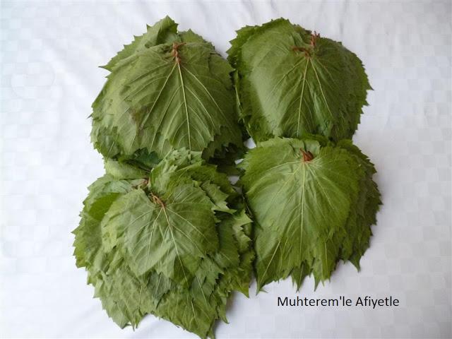 taze asma yaprağı resimleri