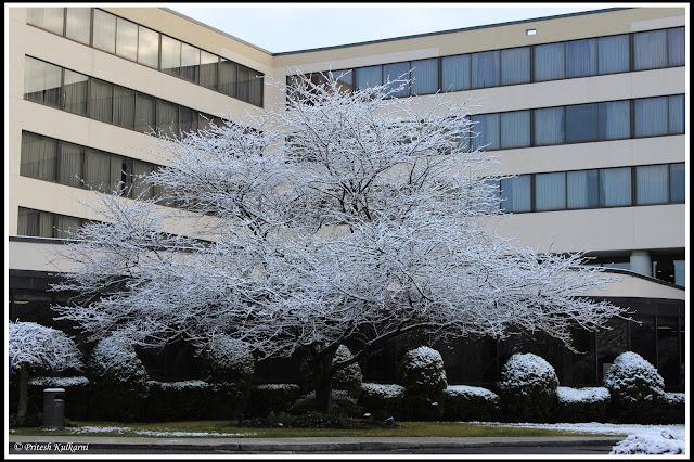 Snowfall at Stamford Hotel
