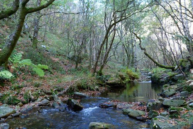 Río Ahío o de La Bobia - Los Oscos - Asturias