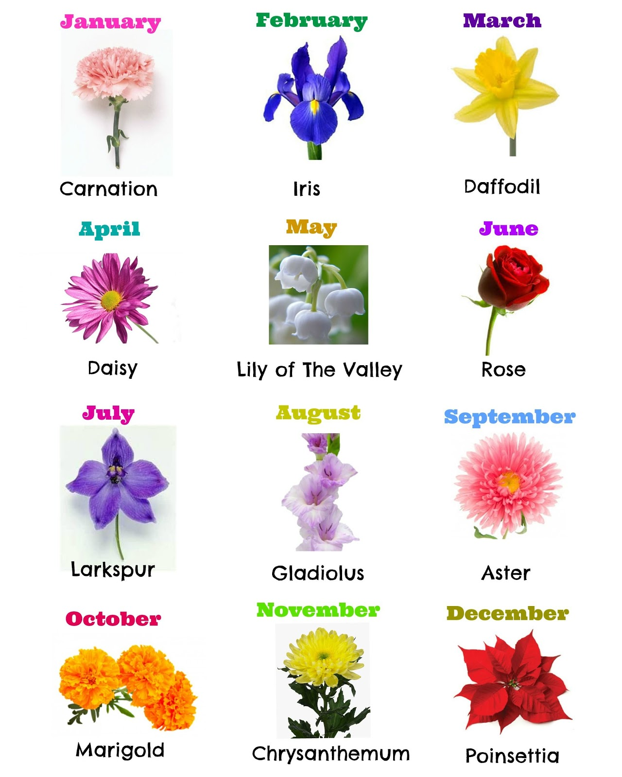 Birthday flowers clipart topsimages clipart of flowers for your birth month best graphic sharing u eyeendear co dec birth flower izmirmasajfo